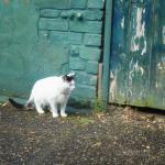 A cat in the old alley 8x8 ..