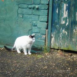 A cat in the old alley 8x8 photography print